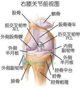 前十字韧带损伤和后十字韧带损伤哪种更严重-前叉之家