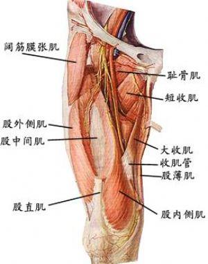 前交叉韧带重建手术后肌肉萎缩怎么办?-前叉之家