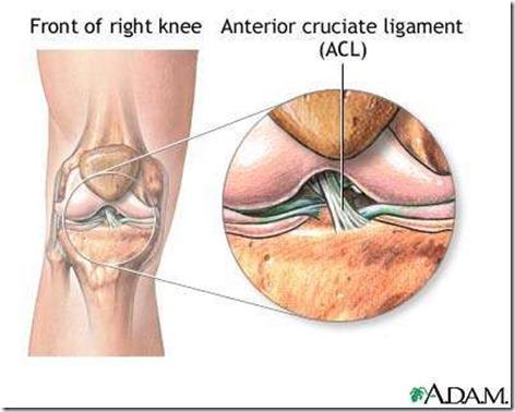 前交叉韧带解剖图1