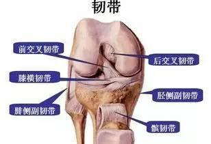前交叉韧带打篮球最易损伤的部位