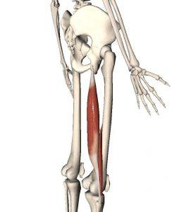 前交叉韧带重建术后腘窝疼?四种训练了解一下