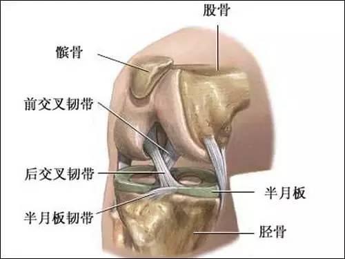 膝关节构造有哪些